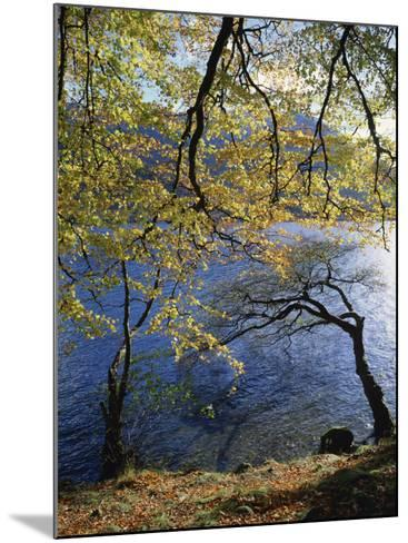 Autumn Trees at Ullswater, Lake District National Park, Cumbria, England, United Kingdom, Europe-Rainford Roy-Mounted Photographic Print