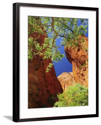 Mini Palms Gorge, Bungle Bungle, Purnululu National Park, Kimberley, Western Australia, Australia-Schlenker Jochen-Framed Art Print