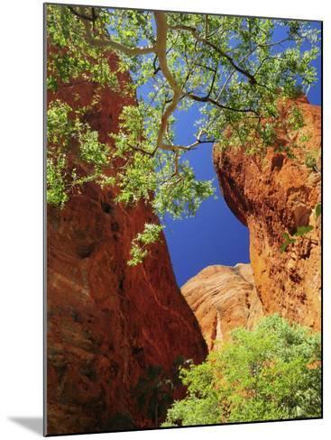 Mini Palms Gorge, Bungle Bungle, Purnululu National Park, Kimberley, Western Australia, Australia-Schlenker Jochen-Mounted Photographic Print