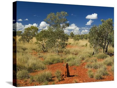 Termite Mounds in the Outback, Queensland, Australia, Pacific-Schlenker Jochen-Stretched Canvas Print