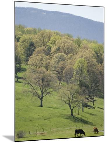 Blue Ridge Farm, Virginia Historic Landmark, Virginia, United States of America, North America-Snell Michael-Mounted Photographic Print
