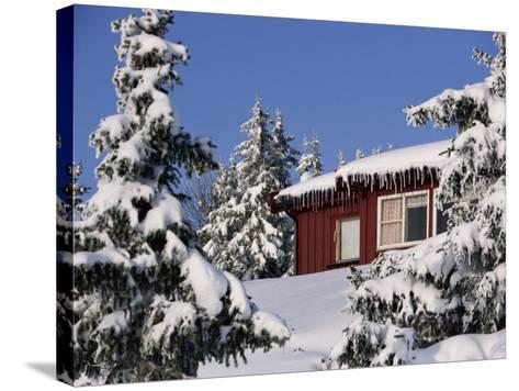 Snow Covered Trees and House, with Icicles, Near Sjusjoen, Lillehammer Area, Norway, Scandinavia-Woolfitt Adam-Stretched Canvas Print