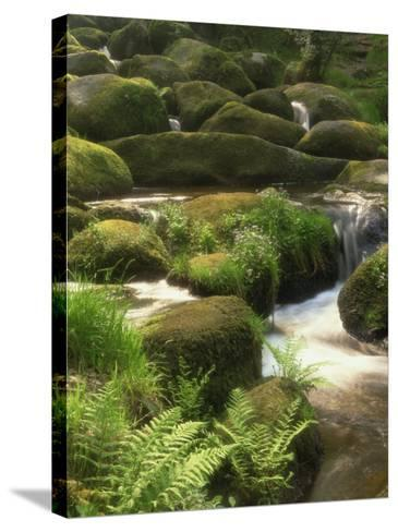 Mountain Stream Cascades over Rocks Covered with Mosses, Ferns and Flowers in Scotland, UK--Stretched Canvas Print