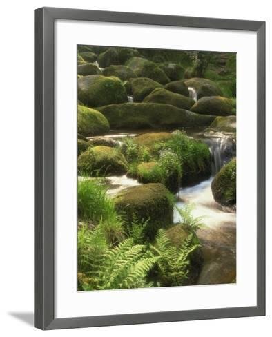 Mountain Stream Cascades over Rocks Covered with Mosses, Ferns and Flowers in Scotland, UK--Framed Art Print