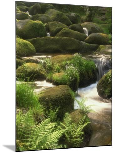 Mountain Stream Cascades over Rocks Covered with Mosses, Ferns and Flowers in Scotland, UK--Mounted Photographic Print