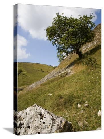 Cressbrook Dale, White Peak, Peak District National Park, Derbyshire, England, United Kingdom-White Gary-Stretched Canvas Print