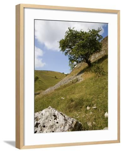 Cressbrook Dale, White Peak, Peak District National Park, Derbyshire, England, United Kingdom-White Gary-Framed Art Print