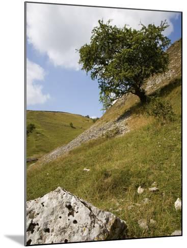 Cressbrook Dale, White Peak, Peak District National Park, Derbyshire, England, United Kingdom-White Gary-Mounted Photographic Print