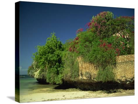 Bougainvillea Along Wall Next to Sea, Malindi, Kenya, East Africa, Africa-Strachan James-Stretched Canvas Print
