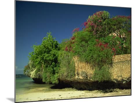 Bougainvillea Along Wall Next to Sea, Malindi, Kenya, East Africa, Africa-Strachan James-Mounted Photographic Print