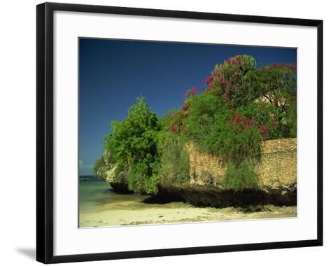 Bougainvillea Along Wall Next to Sea, Malindi, Kenya, East Africa, Africa-Strachan James-Framed Art Print