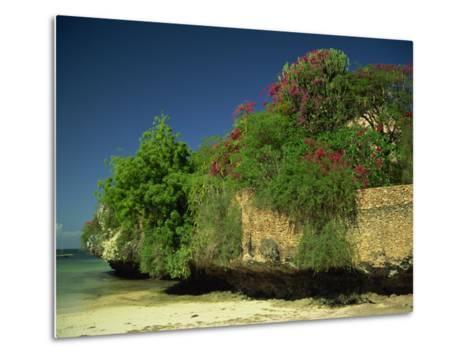Bougainvillea Along Wall Next to Sea, Malindi, Kenya, East Africa, Africa-Strachan James-Metal Print