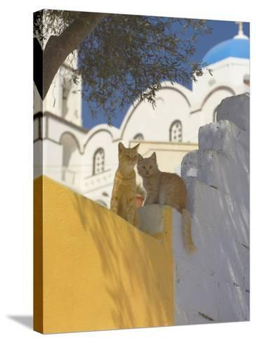 Cats in Akrotiri, Santorini, Cyclades, Greek Islands, Greece, Europe-Papadopoulos Sakis-Stretched Canvas Print