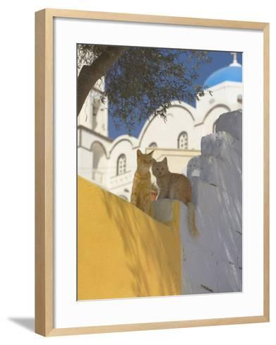 Cats in Akrotiri, Santorini, Cyclades, Greek Islands, Greece, Europe-Papadopoulos Sakis-Framed Art Print