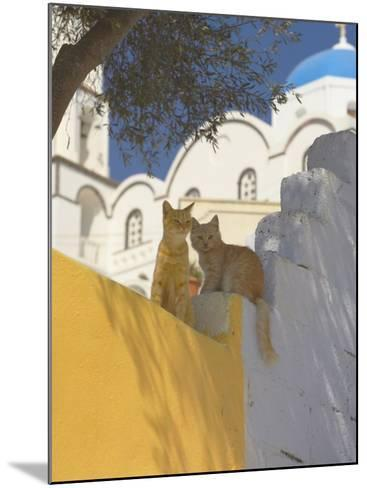Cats in Akrotiri, Santorini, Cyclades, Greek Islands, Greece, Europe-Papadopoulos Sakis-Mounted Photographic Print
