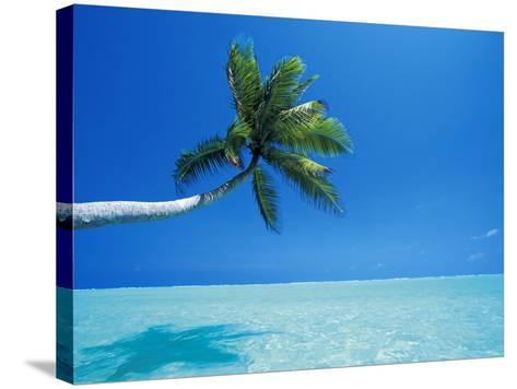 Palm Tree Overhanging the Sea, Male Atoll, Maldives, Indian Ocean-Papadopoulos Sakis-Stretched Canvas Print