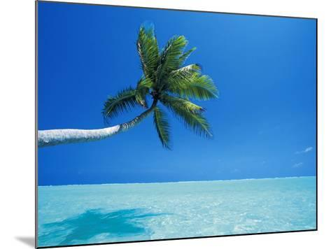Palm Tree Overhanging the Sea, Male Atoll, Maldives, Indian Ocean-Papadopoulos Sakis-Mounted Photographic Print