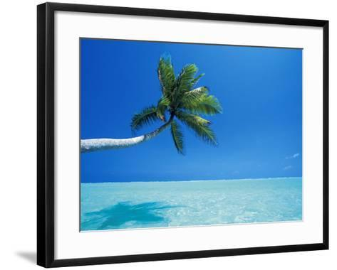 Palm Tree Overhanging the Sea, Male Atoll, Maldives, Indian Ocean-Papadopoulos Sakis-Framed Art Print