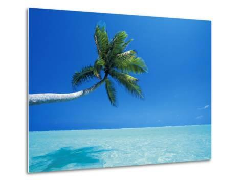 Palm Tree Overhanging the Sea, Male Atoll, Maldives, Indian Ocean-Papadopoulos Sakis-Metal Print
