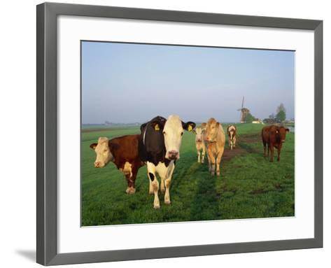 Cows on a Polder in the Early Morning, with a Windmill in the Background, in Holland, Europe-Groenendijk Peter-Framed Art Print