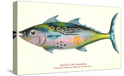 Hawaiian Fish, Kawakawa--Stretched Canvas Print