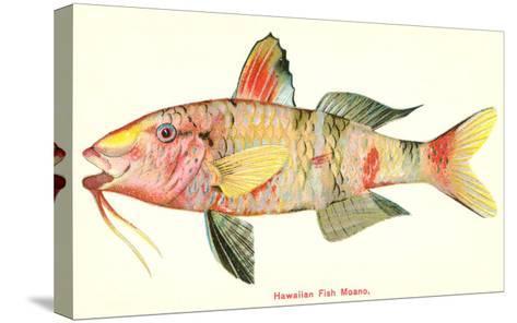 Hawaiian Fish, Moano--Stretched Canvas Print