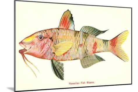 Hawaiian Fish, Moano--Mounted Art Print