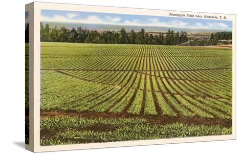 Pineapple Field, Honolulu, Hawaii--Stretched Canvas Print