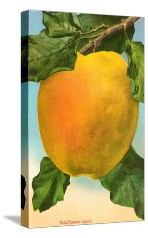 Bellflower Apple--Stretched Canvas Print