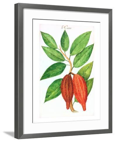 Cacao Pods, Source of Chocolate--Framed Art Print