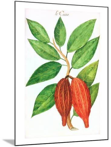 Cacao Pods, Source of Chocolate--Mounted Art Print