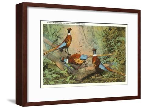Chinese Pheasants, Idaho--Framed Art Print