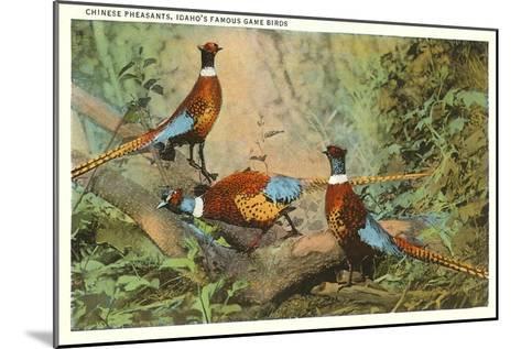 Chinese Pheasants, Idaho--Mounted Art Print