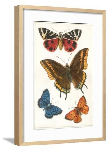 Butterflies--Framed Art Print