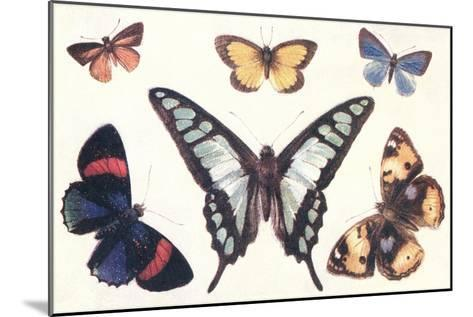 Butterflies--Mounted Art Print