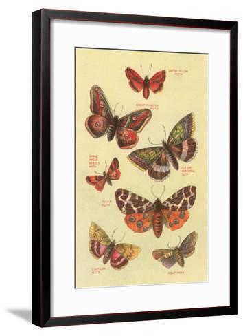 Moths--Framed Art Print
