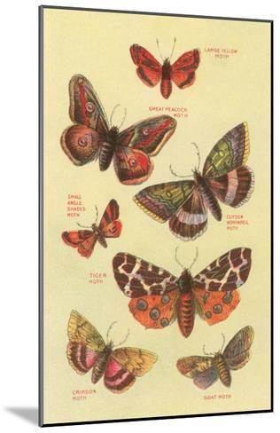 Moths--Mounted Art Print