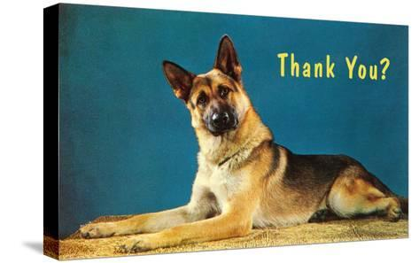 Thank You? Quizzical German Shepherd--Stretched Canvas Print