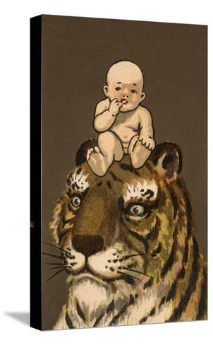 Japanese Baby on Tiger's Head--Stretched Canvas Print