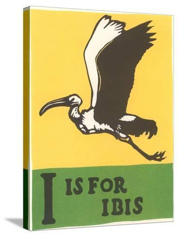 I is for Ibis--Stretched Canvas Print