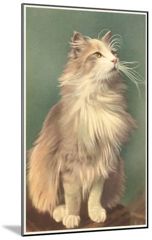 Fluffy Cat--Mounted Art Print