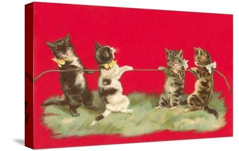 Kittens Playing Tug of War--Stretched Canvas Print