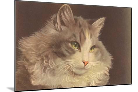 Fluffy Cat--Mounted Art Print