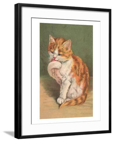 Cat Licking Paw--Framed Art Print