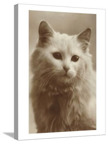 Serious Cat--Stretched Canvas Print