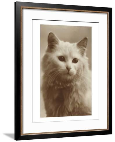 Serious Cat--Framed Art Print