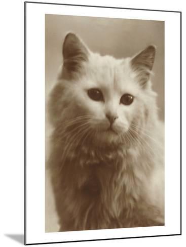 Serious Cat--Mounted Art Print