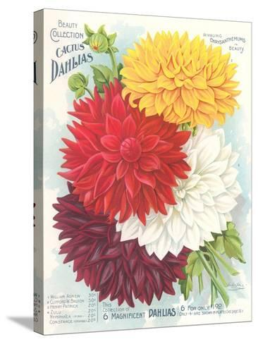 Seed Packet, Dahlias--Stretched Canvas Print