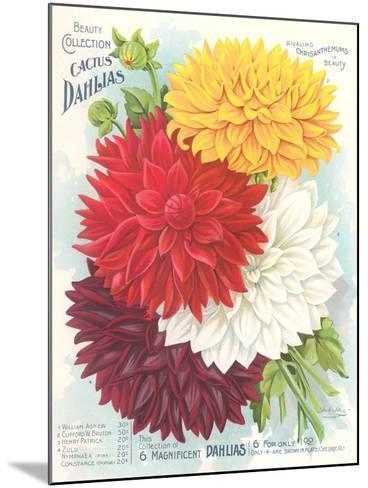 Seed Packet, Dahlias--Mounted Art Print