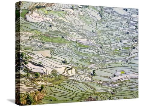 Flooded Laohu Zui Rice Terraces, Mengpin Village, Yuanyang County, Yunnan, China-Charles Crust-Stretched Canvas Print